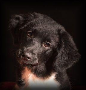Puppy Love van
