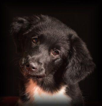 Puppy Love von Eddie Meijer