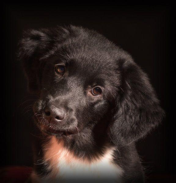 Puppy Love van Eddie Meijer