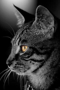 schwarz-weiße Katze von Wilma Meurs