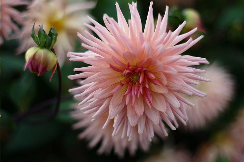 Pink explosion van Mike Bing
