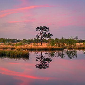 Zonsondergang bij Holtveen in Nationaal Park Dwingelderveld