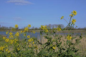 Blüten in der Schulter von A'da de Bruin