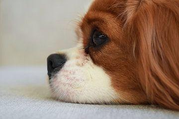 Hund von der Seite fotografiert von Chloe 23