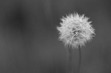 Een alleen staande bloem van Bjorn Dockx
