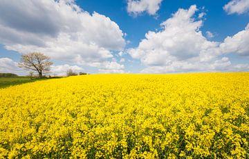 Yellow flower power van Joris Pannemans - Loris Photography
