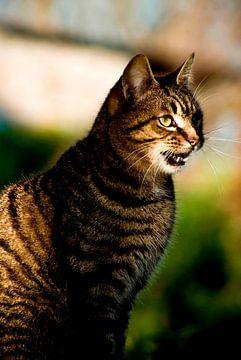 Cat (1) van Norbert Sülzner