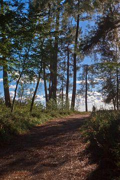 Het pad naar de zon. Voetpad in een prachtig dennenbos. Pitsundskaya-bosje relikwieboom. Toerisme in van Michael Semenov