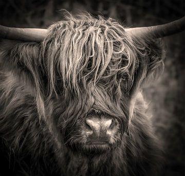 Schotse Hooglander zwart wit van Marjolein van Middelkoop