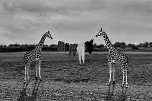 Drogen van wasgoed in Afrika - zwart-wit