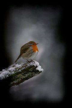Robin im Schnee von Albert Beukhof