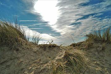 In de Duinen van de Zeeuwse Kust (Vlissingen) von DoDiLa Foto's