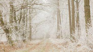 Berijpt bos van