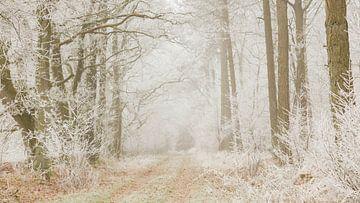 Berijpt bos van Karla Leeftink