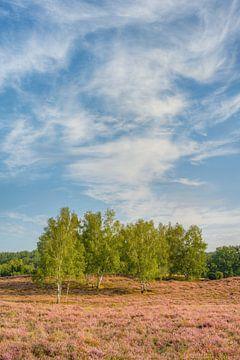 Wolken und Bäume in der Heidelandschaft von Michael Valjak