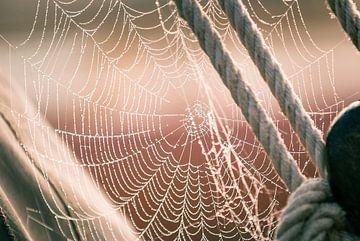 Ein Spinnennetz voller Tautropfen von Fotografiecor .nl