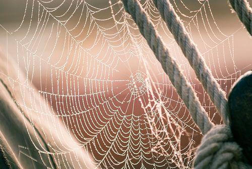 Een spinnenweb vol met dauwdruppels