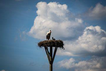 Der Storch und seine Jungen von Jesse Lamberink