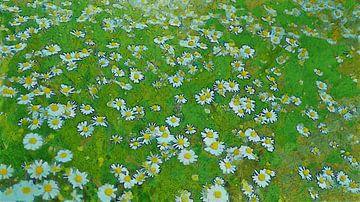 Madeliefjes - Wilde Madelief Bloemen in de Natuur van Dirk van der Ven