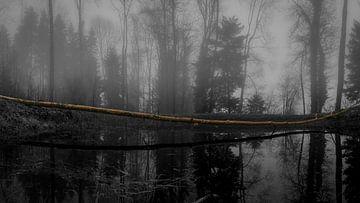 Der Baumstamm von Stefan Heesch