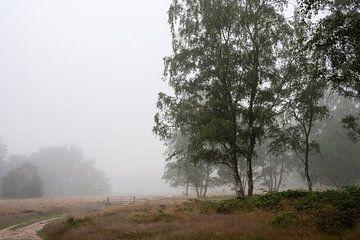 Wolfhezer Heide Teil 6