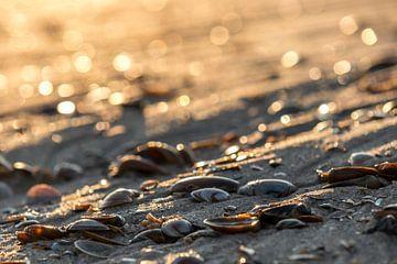 Schelpen bij zonsondergang von Peter Heins