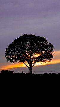 boom voor de zonsondergang van Liv Jongman