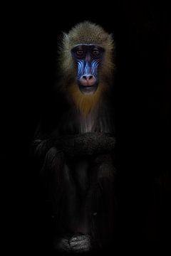 Vrouwelijke madrilla met een blauw gezicht en het gezicht van een heilige of een yogi in meditatie,  van Michael Semenov