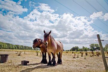 Horses von Steven De Baere