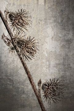 Gewöhnliche Agrimonie - Agrimonia eupatoria von Christophe Fruyt
