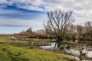 Winters plaatje bij de Oeverlanden Strijen Sas van Leontine van der Stouw