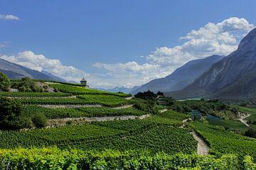Panorama wijngaard von Caroline van Sambeeck