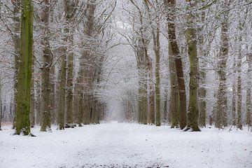 Verse sneeuw op takken in het bos