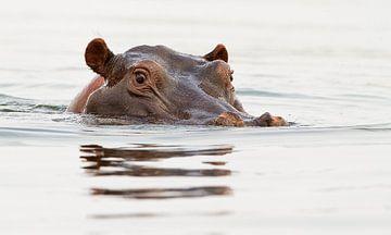 Nijlpaard van HJ de Ruijter