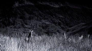 Het hert zoekt zijn weg in de Schotse hooglanden van Studio de Waay