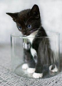 Kitten in een ronde glazen bak van