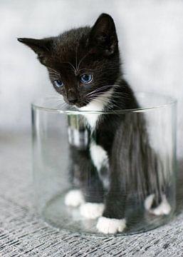Kitten in een ronde glazen bak van Christa Thieme-Krus