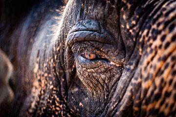 Die Seele des Elefanten von Joey Ploch