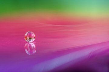 Kleuren als een regenboog  van Cocky Anderson