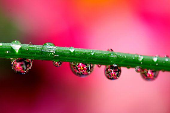 waterworld...flowers in drops van Els Fonteine