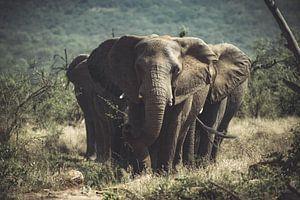 Eine Gruppe von Elefanten.