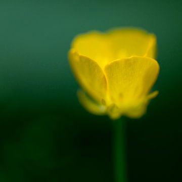Abstracte gele bosboterbloem van Tonko Oosterink
