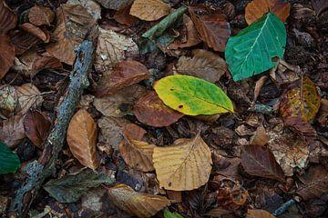 Herfst bladeren op de grond in het bos van Anges van der Logt