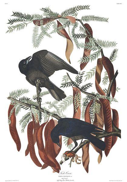 Viskraai van Birds of America