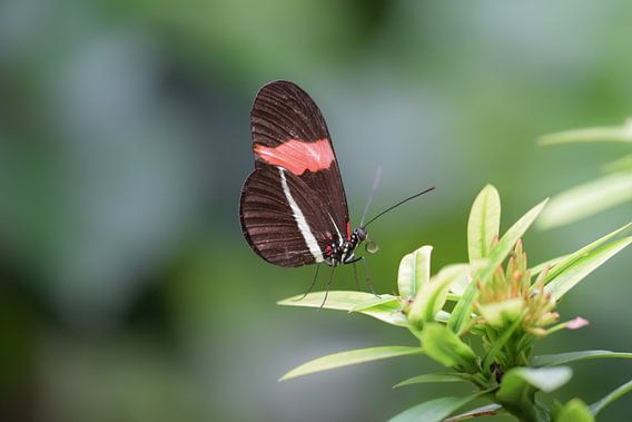 Bruin met rode vlinder op een groene struik