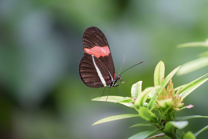 Bruin met rode vlinder op een groene struik van Kim de Been