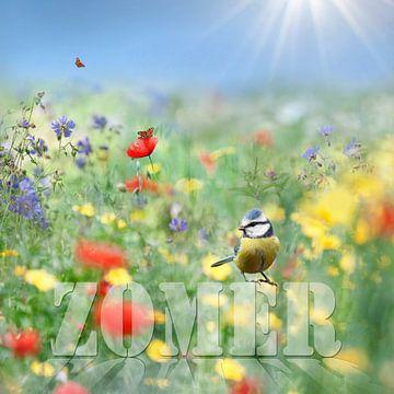 Zomer von Teuni's Dreams of Reality