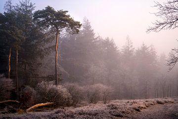 Winter in den Niederlanden von elma maaskant
