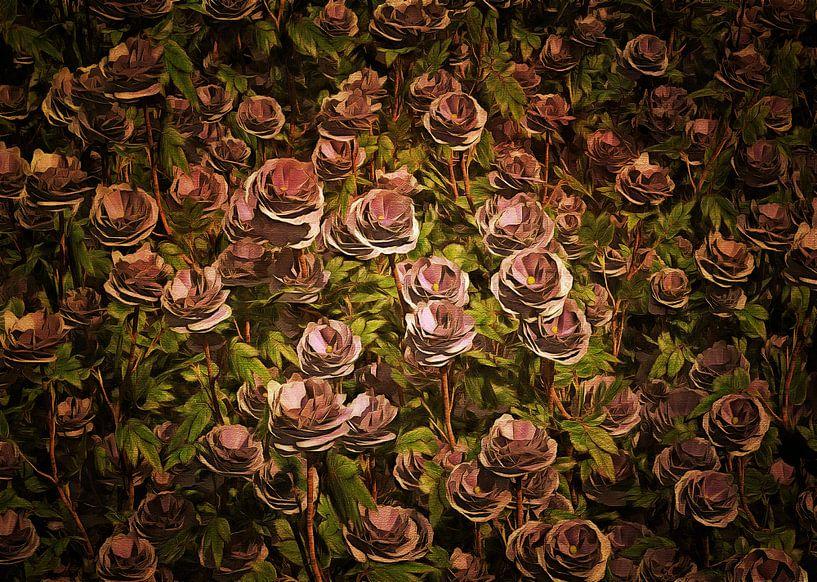 Rozen – Een veld van Oud roze rozen van Jan Keteleer
