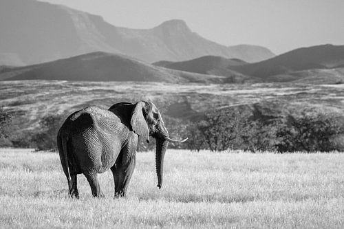 Zwart-wit foto van woestijnolifant / olifant in het landschap - Twyfelfontein, Namibië van Martijn Smeets